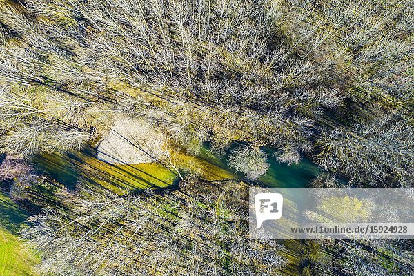 Ega river and poplar grove. Aerial view. Ancin area. Navarre  Spain  Europe.