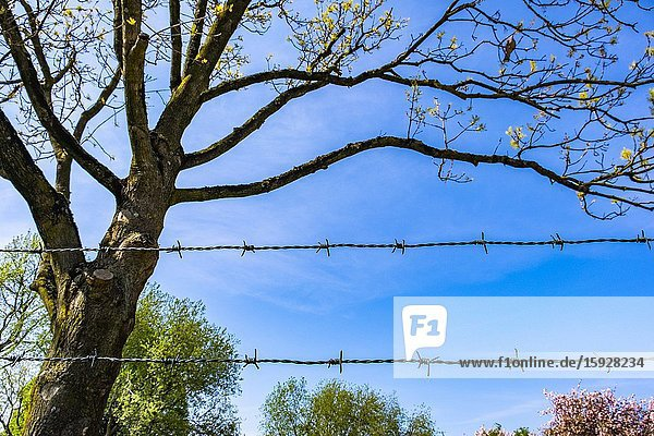 Barbed wire in nature.