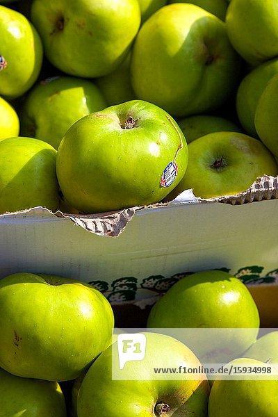 British Bramley apples for sale. Street trader Salisbury.