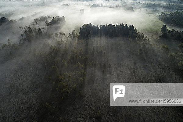 Deutschland  Bayern  Garmisch-Partenkirchen  Drohnenansicht des Murnauer Moosfeuchtgebietes bei nebliger Morgendämmerung