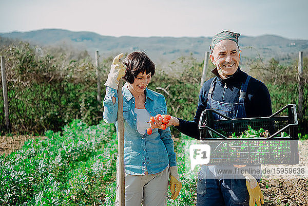 Smiling woman and man standing in vegetable garden  holding plastic create with freshly picked vegetables