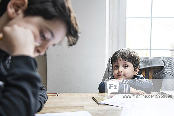 Two boys with brown hair sitting at table at home  doing homework.