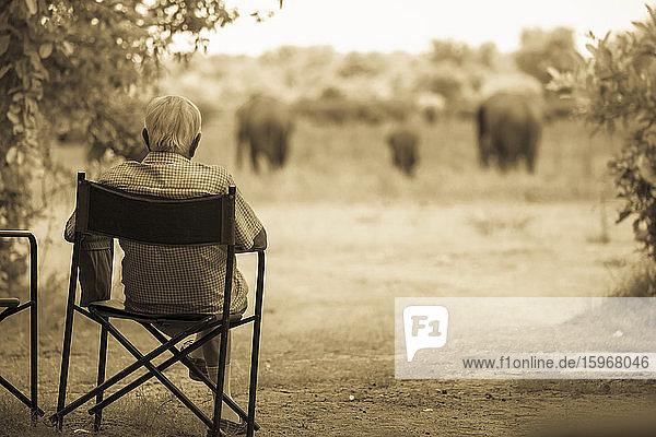 Älterer Mann auf einem Stuhl  der eine Gruppe von Elefanten in der Nähe beobachtet.