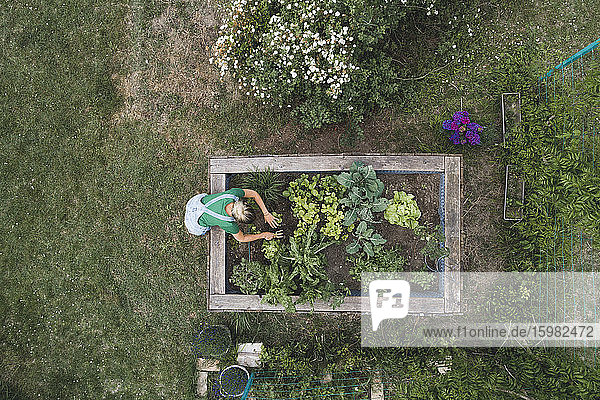 Aerial view of mid adult woman planting in raised bed at yard