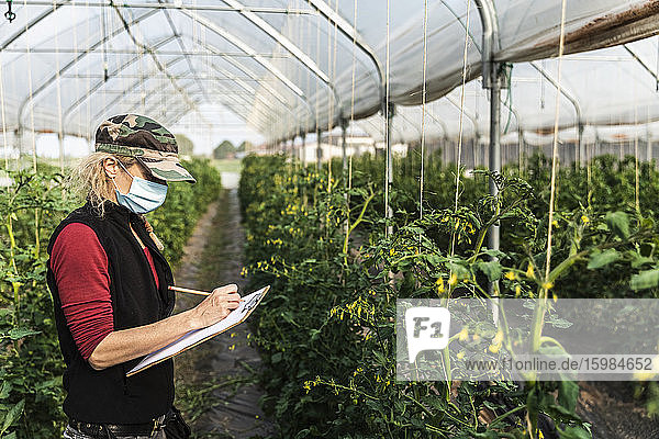 Female farm worker with surgical mask checking the growth of organic tomatoes in a greenhouse