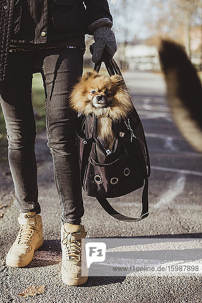 Low section of woman carrying Pomeranian in pet carrier bag on footpath at park