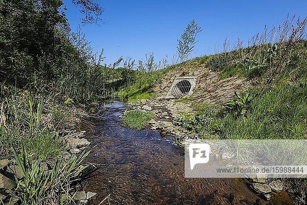 Renaturiertes Fließgewässer  der Breuskes Mühlenbach gehört zum Flusssystem der Emscher  war vorher ein offener  oberirdischer Schmutzwasserkanal  Emscherumbau  Recklinghausen  Ruhrgebiet  Nordrhein-Westfalen  Deutschland  Europa