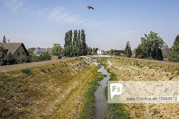 Renaturalised watercourse  the Hellbach belongs to the Emscher river system  was previously an open  above-ground sewer  Emscher conversion  Recklinghausen  Ruhr area  North Rhine-Westphalia  Germany  Europe