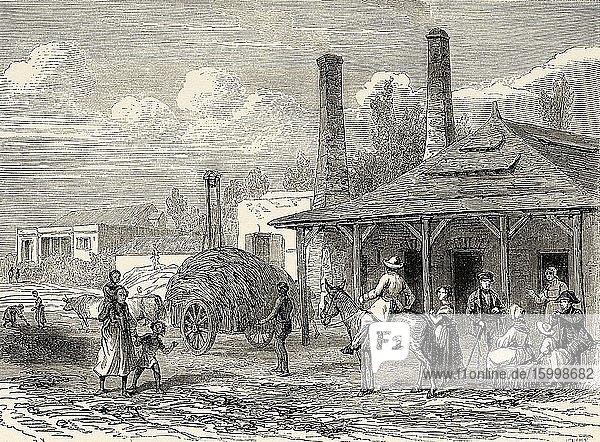 Old sugar cane factory  Mauritius Island. Mascarene Islands South Africa  Old 19th century engraved illustration  Le Tour du Monde 1863.