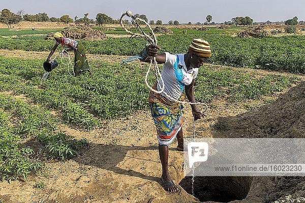 Mikrofinanz-Kundenmarkt Landwirtschaft in der Provinz Savanes  Nordtogo