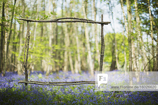 Wood stick frame over idyllic bluebell flowers in woods