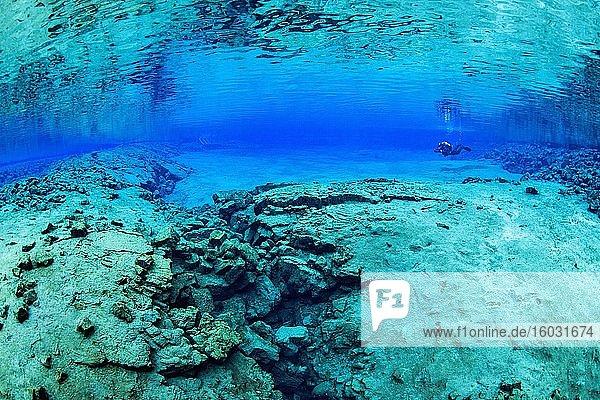 Taucher in der Silfra-Lagune  Island  Europa