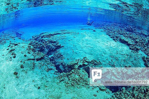 Taucher in der Silfra-Lagune  Thingvellir Nationalpark  Sudurnes  Island  Europa