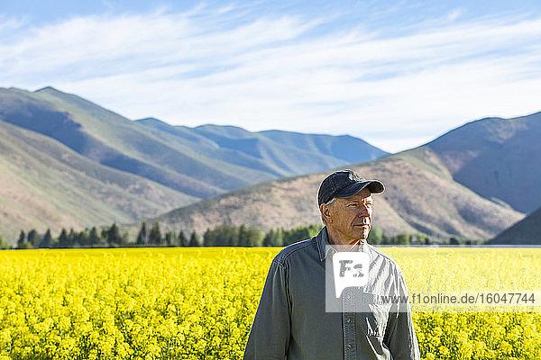 USA  Landwirt steht im Senffeld