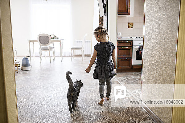 Girl walking with British Shorthair cat at home