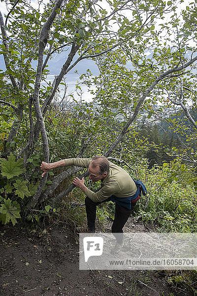 Mann wandert die steilen Schieferklippen oberhalb der Baumgrenze auf dem Mount Marathon Trail  Seward  Seward  Sommer  Süd-Zentral-Alaska