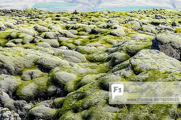 Close-up detail of moss-covered rocks on a rugged terrain with a glacier and glacial lagoon in the background; Skaftarhreppur  Southern Region  Iceland