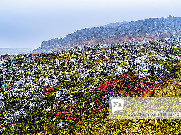 Colourful plants and rock with rugged cliffs in the fog  Northwestern Iceland; Hunaping vestra  Northwestern Region  Iceland