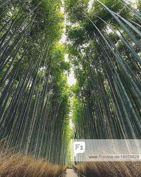 Kameyama-Bambuswald; Kyoto  Kansai  Japan