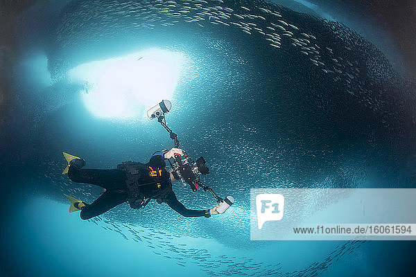 A photographer under a massive school of millions of sardines; Moalboal  Cebu  Central Visayas  Philippines