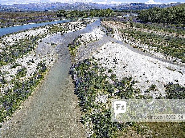 Flussbett des Ahuriri River  Luftaufnahme  lila blühende Vielblättrige Lupine (Lupinus polyphyllus)  bei Omarama  Otago  Südinsel  Neuseeland  Ozeanien