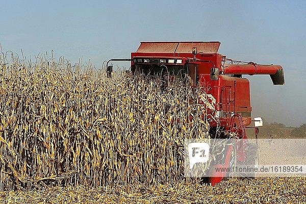 Erntemaschine erntet Mais  Department Allier  Auvergne-Rhone-Alpes  Frankreich  Europa