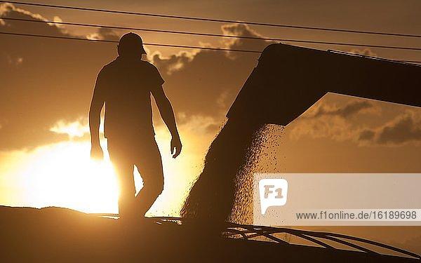 Arbeiter beim Entladen von Sojabohnen bei Luis Eduardo Magalhaes  Bahia  Brasilien  Südamerika