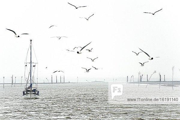 Segelschiff mit Möven bei nebeligem Wetter auf der Nordsee  Langeoog  Ostfriesische Inseln  Ostfriesland  Niedersachsen  Deutschland  Europa