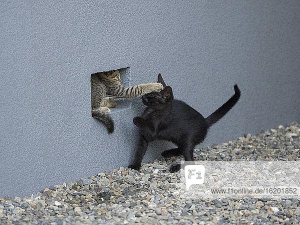 Cats, Cats
