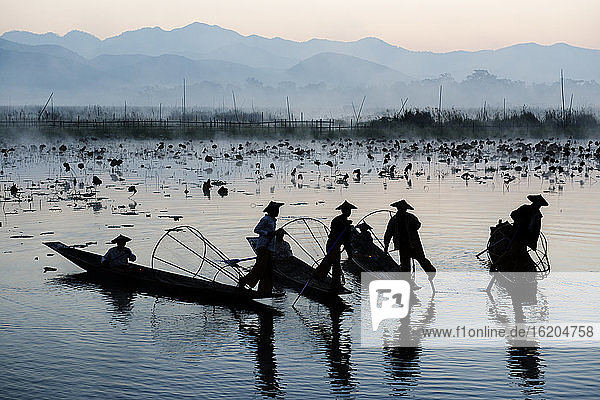 Fishermen fishing by traditional fishing techniques at dusk  Inle lake  Shan State  Myanmar