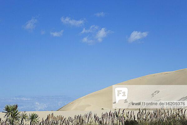 New Zealand  View of Te Paki Giant Sand Dunes