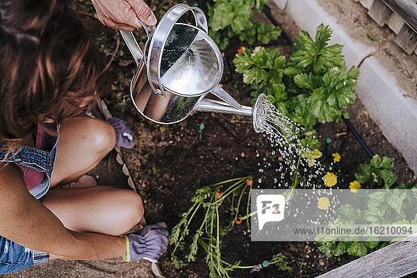 Woman crouching by man watering plants in community garden