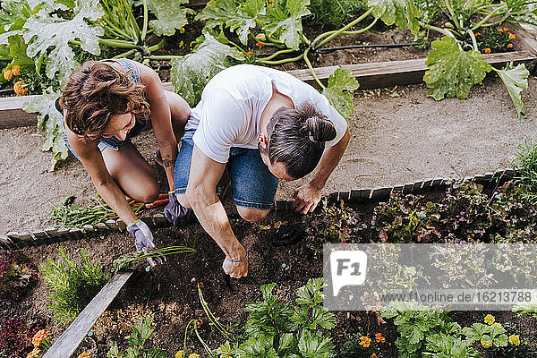 Couple planting while crouching in vegetable garden