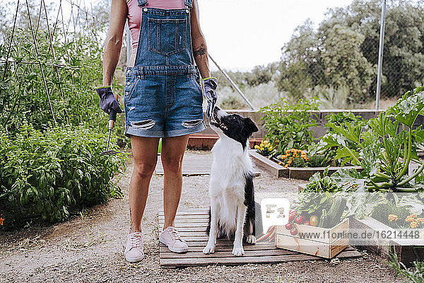 Woman with border collie standing in vegetable garden