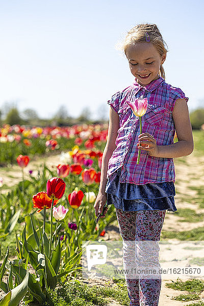 Smiling girl holding tulip while standing in field against clear sky during sunny day