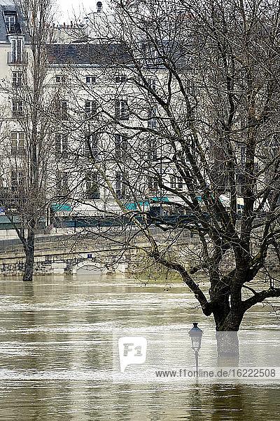 Europa  Frankreich  Ile de France  Paris  die Seine tritt am 28. Januar 2018 über die Ufer  ein Baum und ein Laternenpfahl stehen auf der Ile St. Louis unter Wasser