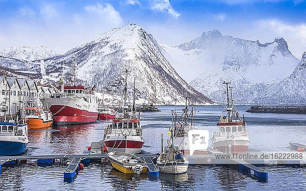 Norwegen  Bezirk Tromso  Insel Senja  Fjordgard  Kabeljauhafen Husoy