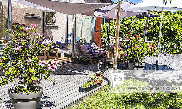 Frankreich  Terrasse eines Gartens im Sommer  blühender Hibiskus