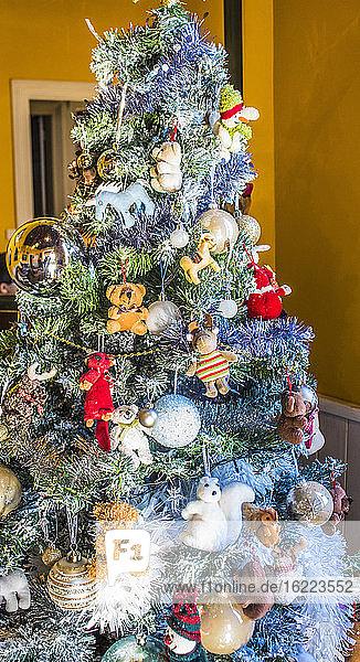 Frankreich  Weihnachtsbaum