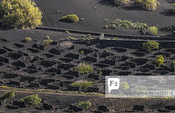 Spanien  Kanarische Inseln  Insel Lanzarote  Weinbau im vulkanischen Tal der Geria