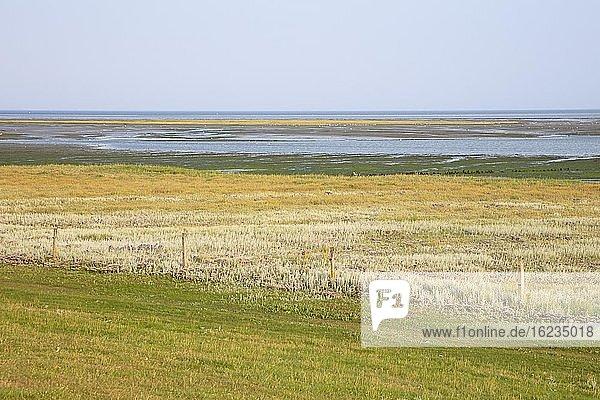 Salzwiesen im Nationalpark Wattenmeer  UNESCO-Weltnaturerbe  Borkum  Ostfriesische Insel  Ostfriesland  Niedersachsen  Deutschland  Europa