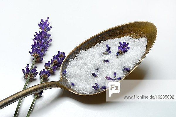 Lavendelzucker in Löffel und Lavendelblüten  Deutschland  Europa