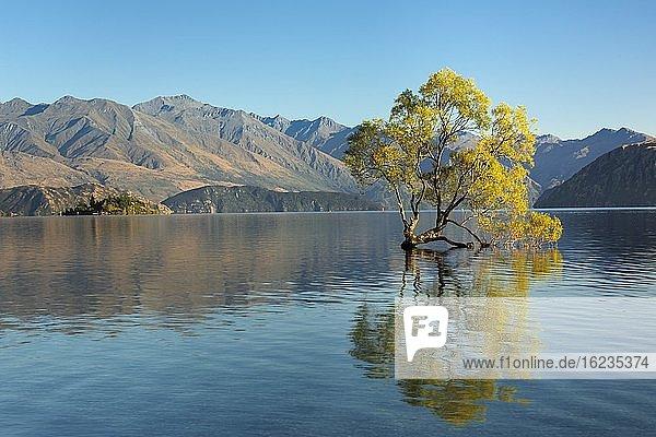 Lake Wanaka bei Sonnenaufgang  Mount-Aspiring Nationalpark  UNESCO Weltnaturerbe  Otago  Südinsel  Neuseeland  Ozeanien