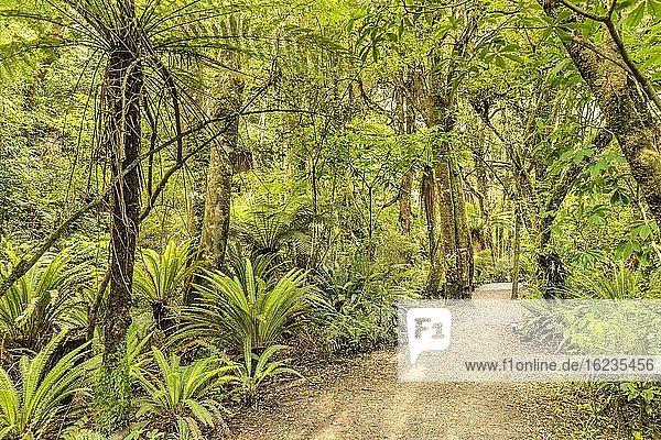 Parakaunui Falls Walk  Tropischer Regenwald  The Catlins  Otago  Südinsel  Neuseeland  Ozeanien