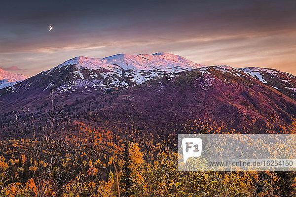 Sonnenuntergangsglühen auf den schneebedeckten Chugach-Bergen mit herbstfarbenem Laub  die Mondsichel erscheint über dem Berg. Chugach State Park  Süd-Zentral-Alaska im Herbst; Anchorage  Alaska  Vereinigte Staaten von Amerika