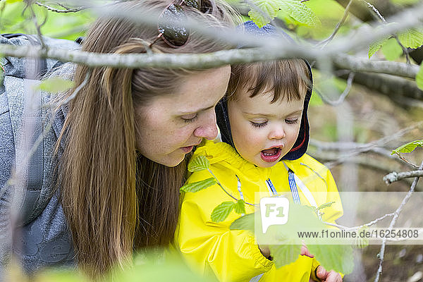 Nahaufnahme von Mutter und Tochter beim Untersuchen von Blättern im Park im Frühling; North Vancouver  British Columbia  Kanada