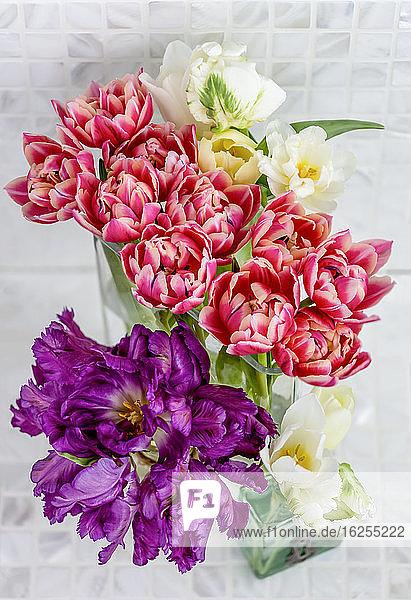 Hochwinkelansicht von Arrangements aus violetten Papageientulpen  rosa Doppeltulpen und weißen Tulpen in Glasvasen; Surrey  British Columbia  Kanada