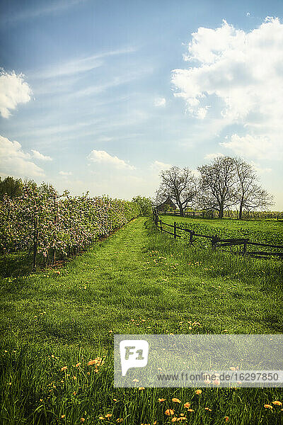 Germany  Hamburg  Area Altes Land  House and apple trees