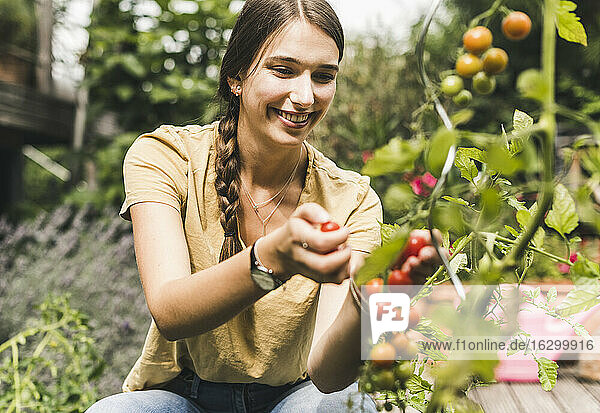 Happy beautiful woman picking cherry tomatoes in vegetable garden