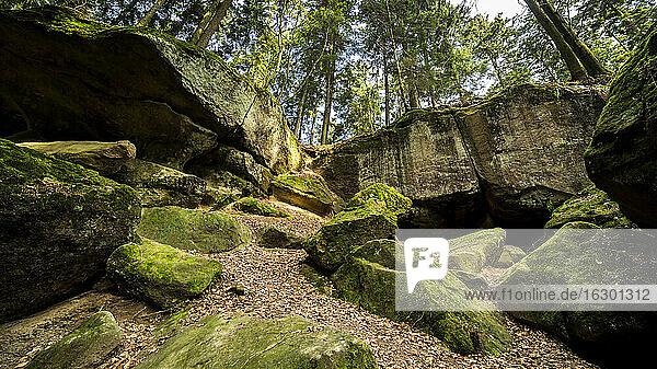 Germany  Baden-Wuerttemberg  Swabian-Franconian natural preserve  Brunnenklinge ravine